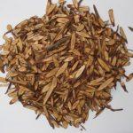 Branch cut cassia