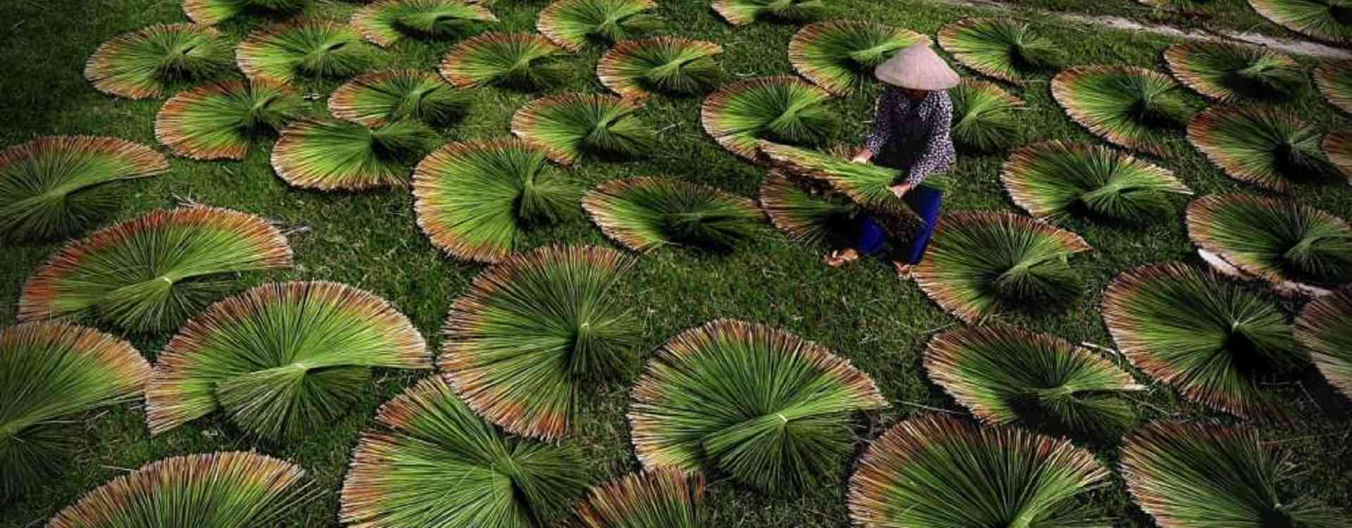seagrass drying
