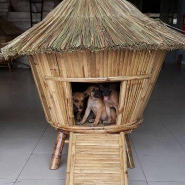 DOG HOUSE IC17-077