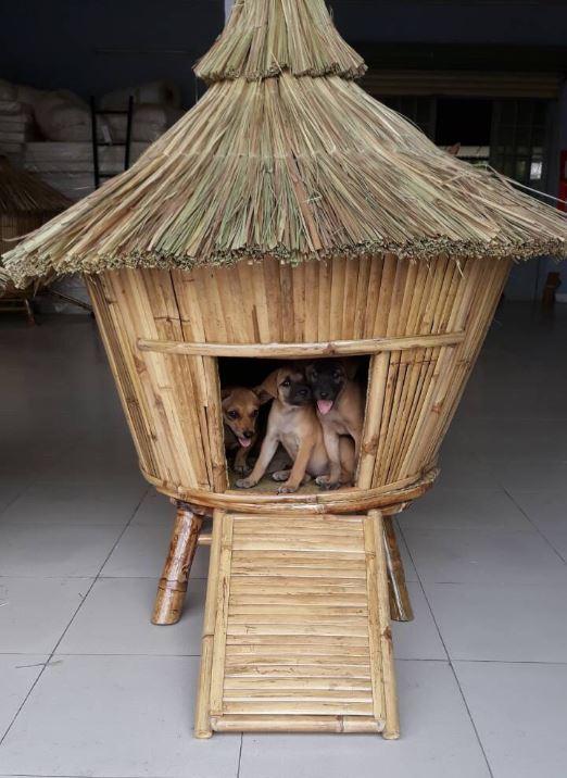 Dog House c