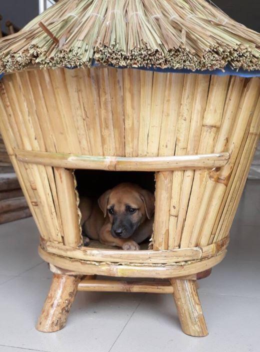 Dog House e