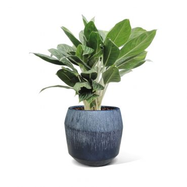 LIGHT FIBER CEMENT POT – RP17-374